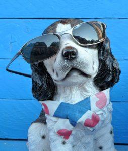 犬×サングラス