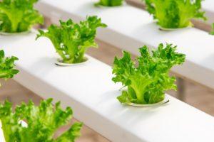 野菜・養液栽培